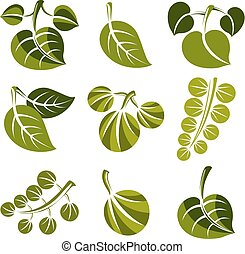 Set of vector green spring leaves isolated on white. Ecology theme design elements, gardening symbols collection. Natural icons set.