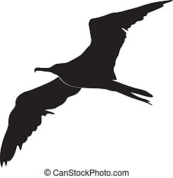 silhouette of frigate bird