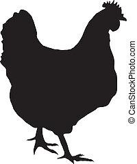 silhouette of hen