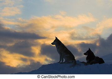 Silhouettes of two wolves (dogs)