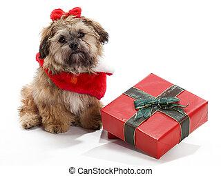 Sitting Christmas Shi Poo