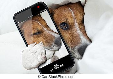 sleepyhead selfie dog
