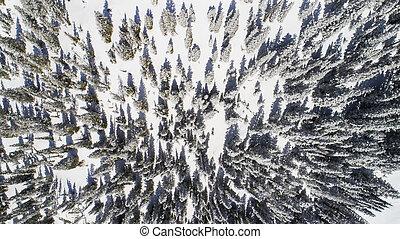 Snow Winter Scene