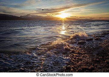 Soaring Eagle at Sunset