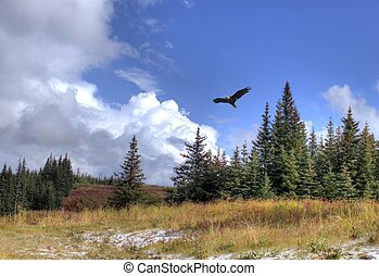 Soaring eagle with scenery