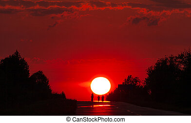 Solar disk and silhouettes of trees against the background of the red sunset sky