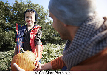 Son helping his father to picking up pumpkins