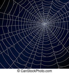 Vector illustration of a spider's web