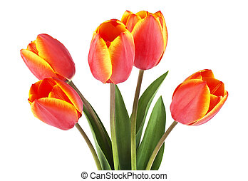 Spring bouquet. Tulips on a white background.