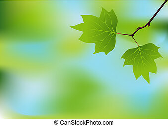 Spring branch background