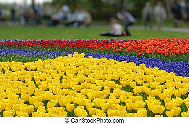 Spring flower bed in Keukenhof gardens