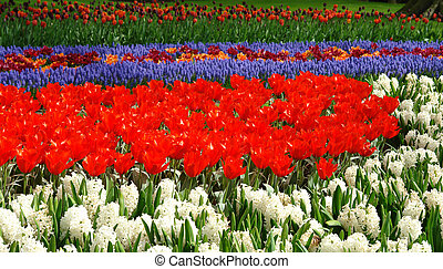 Spring flower bed in Keukenhof