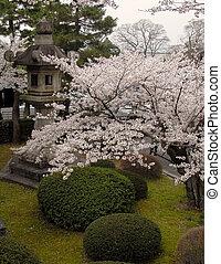 Spring Japanese garden