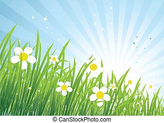 Spring meadow beautiful