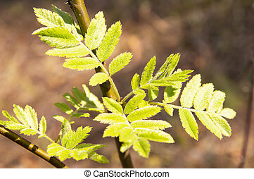 Spring shoots of tree leaves - Earth Day