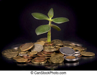 Sprout and coins. Money growth concept.