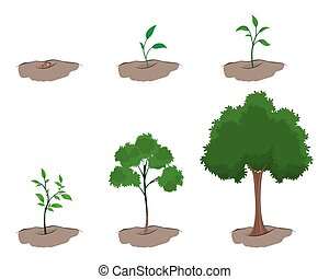 Vector illustration of a stages of growth of the tree