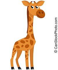 Standing baby giraffe three quarter view.