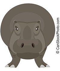 Standing hippopotamus front view.