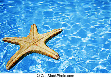 Starfish in Blue Water