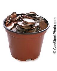 Sterling Money in plant pot