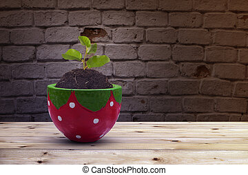 New plant in ceramic pot