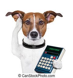 Successful dog accountant