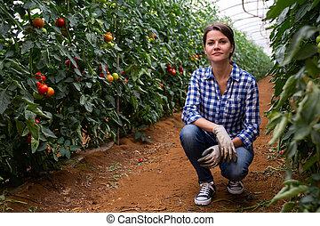 Successful female horticulturist near tomato bushes in greenhouse