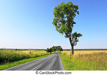 Summer country road