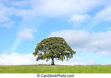 Summer Oak Tree