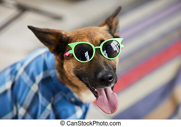 Portrait of dog wearing sunglasses looking at camera while enjoying summer, copy space