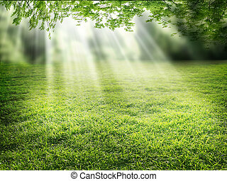 Sunlight falling down through the leaves of tall trees