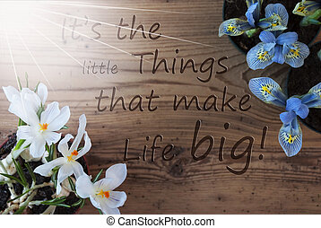 Sunny Crocus And Hyacinth, Quote Little Things Make Life Big