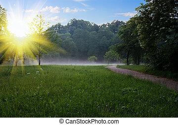 sunrise at the summer park