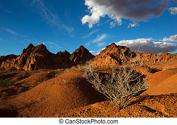 sunset light over the valley of fire with dry sage bush in the foreground
