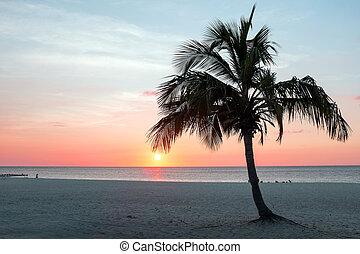 Sunset on Aruba island at Eagle beach in the Caribbean
