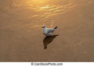 Sunset seagull silhouette on sunset