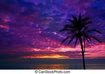 sunset sunrise palm tree over Mediterranean