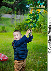The child wants to pick an unripe green Apple