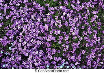 tiny violet flowers background