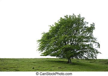 Tree Beauty