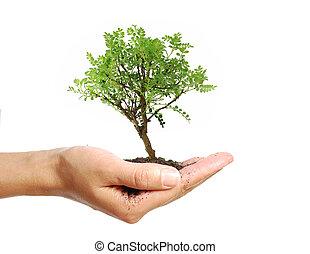 Hand holding a small bonsai tree