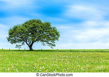 tree on a meadow with clouds