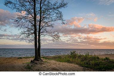 Tree on the seashore sunset view