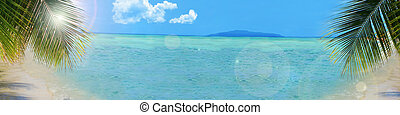 palm tree along the beach of beautiful tropical water and sky great for a backdrop or banner with copy space