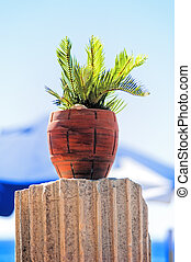 Tropical plant in a red clay pot