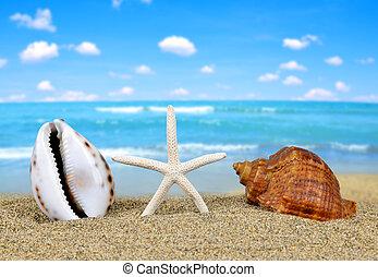 Tropical sea shells with starfish