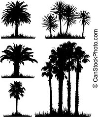 Tropical tree silhouettes