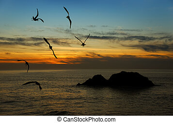 Seagulls flying over the Pacific coast in California in twilight.