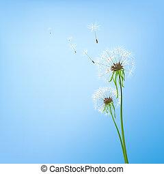 two dandelions in wind on light blue background